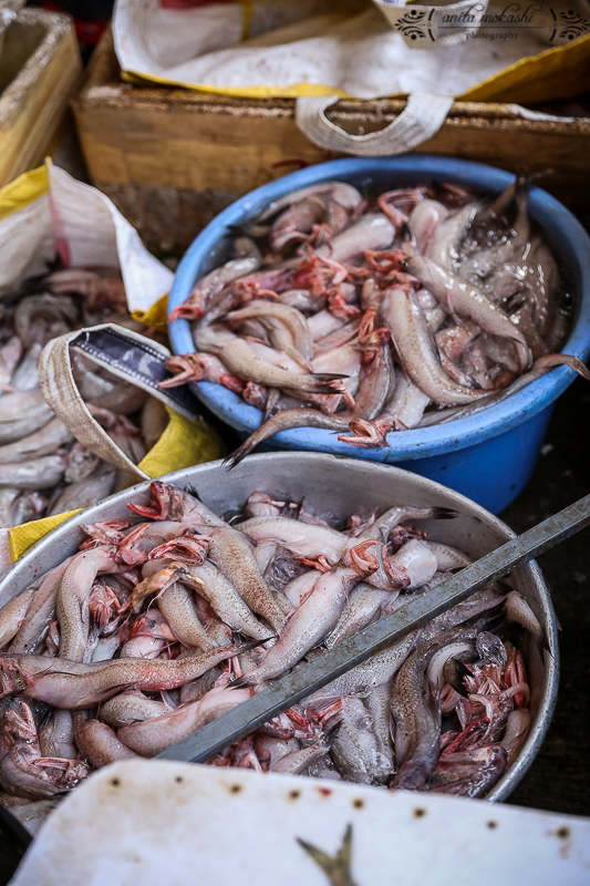 Mumbai Fish Market