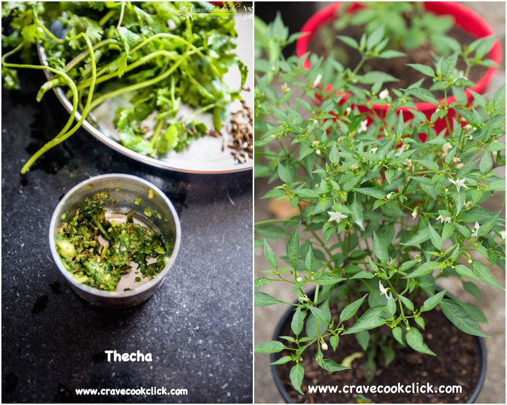 Thecha recipe with green chillies