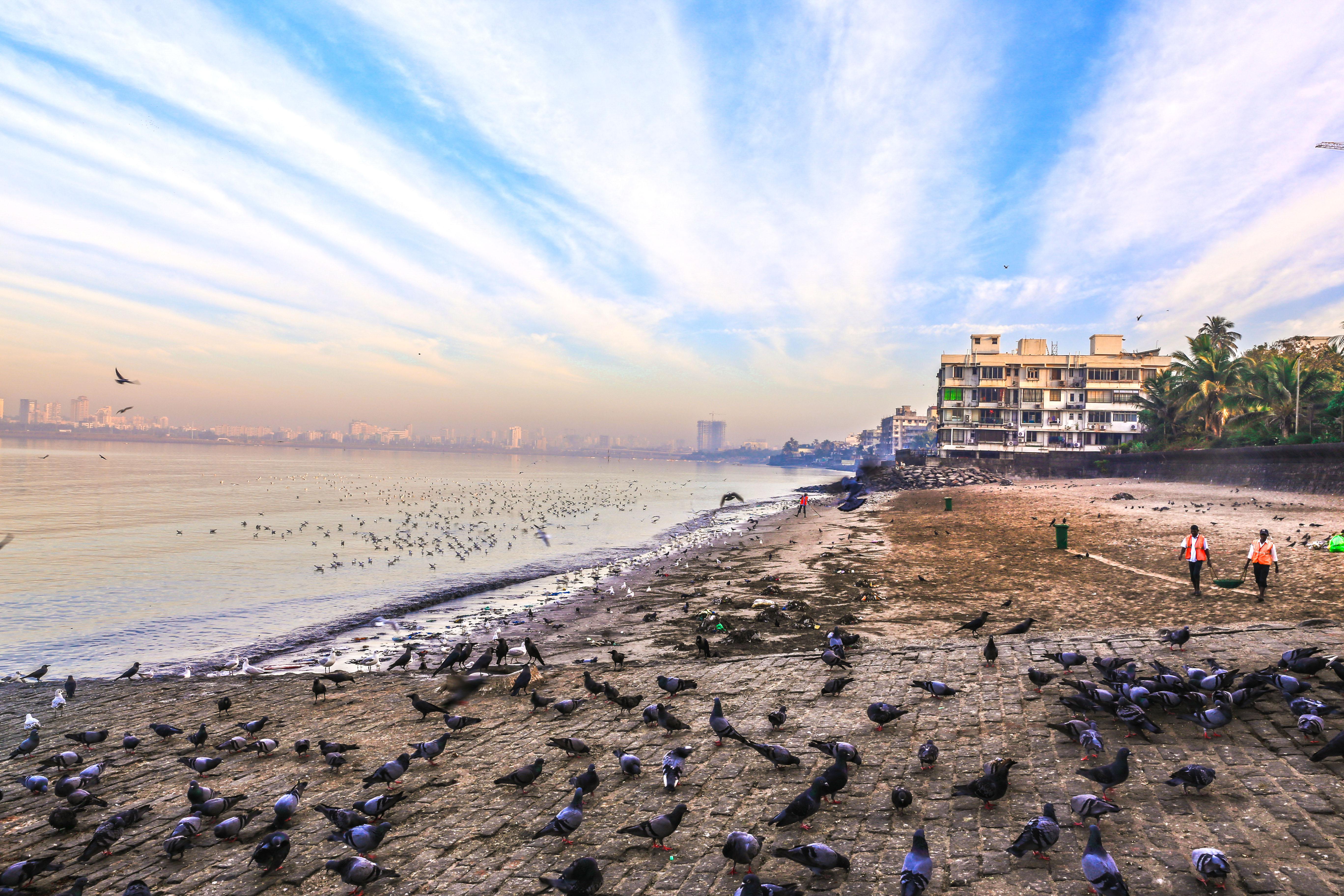 Mumbai sealink, Mumbai, Joggerspark, Shivaji Park, Mumbai skyline
